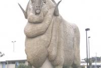 church-sheep